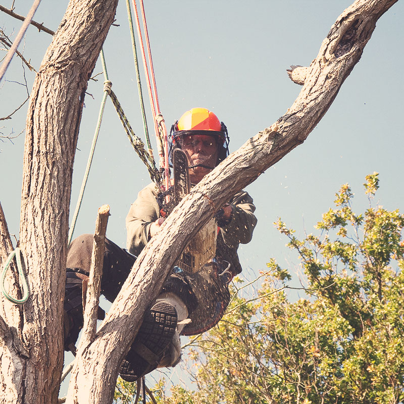 Tree Surgery Maintenance Services
