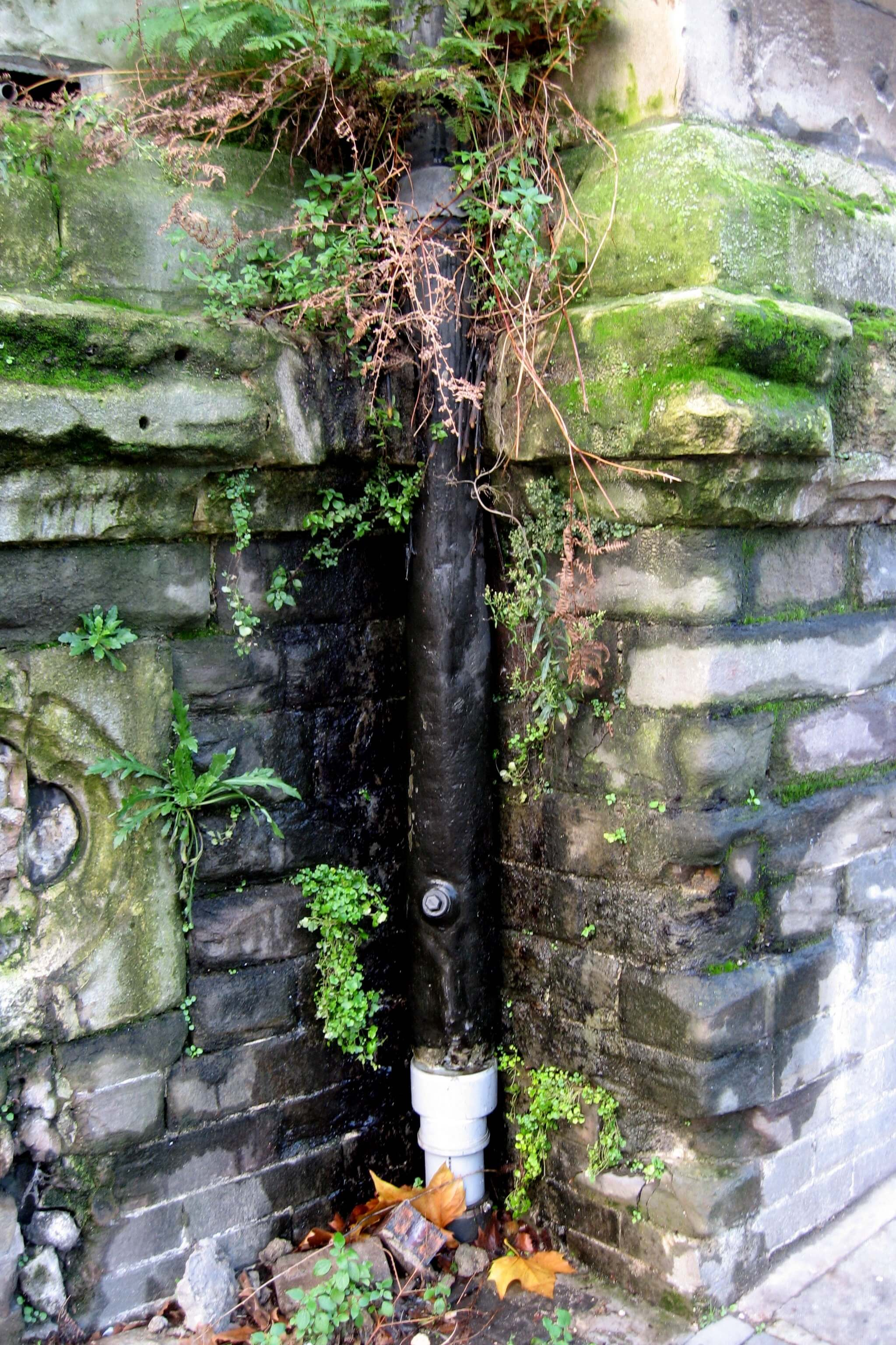 Blocked downpipe causing damp and vegetation to grow