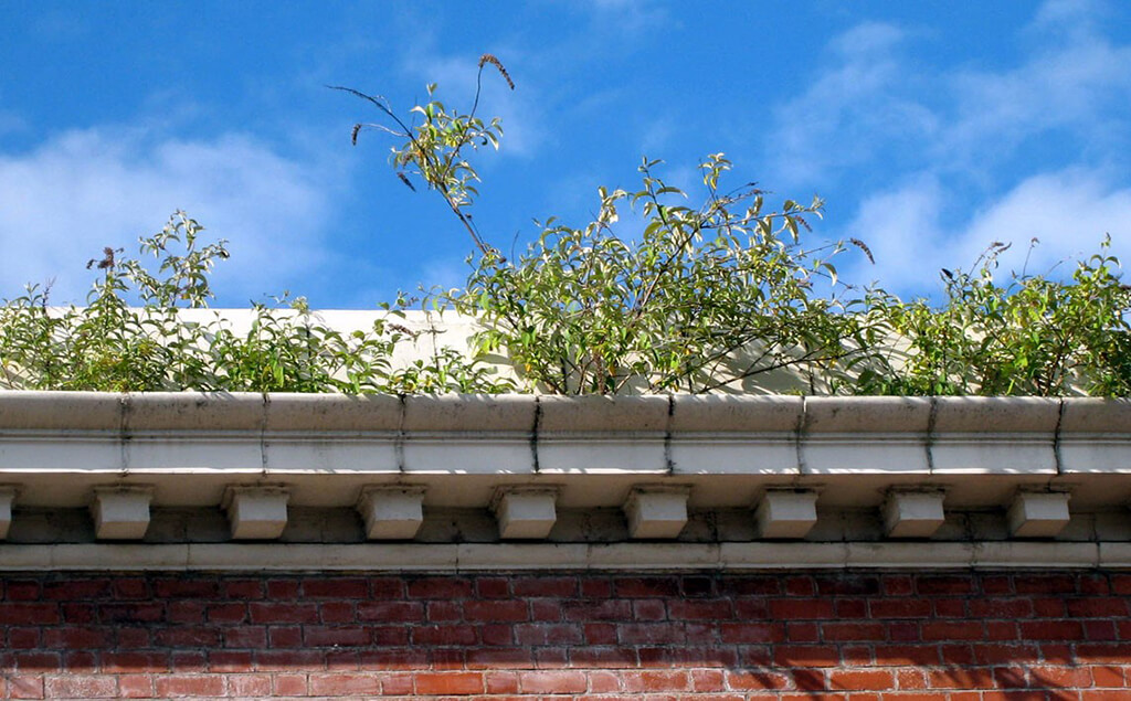 Vegetation blocking gutter(1)