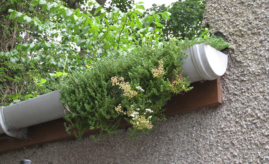 Vegetation blocking gutter